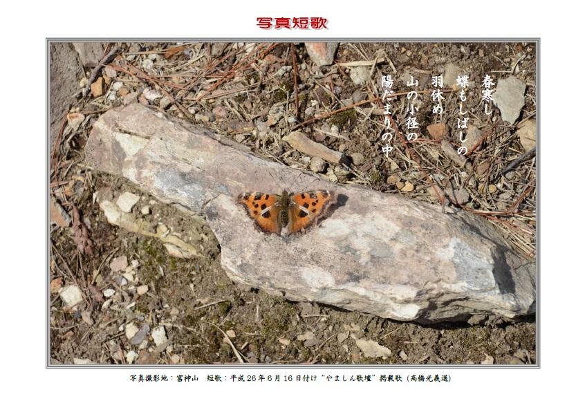 春寒し蝶もしばしの羽根やすむ山の小径の陽だまりの中
