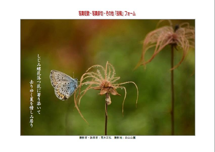 しじみ蝶花落つ花に寄り添いて去りゆく夏を惜しみ居り