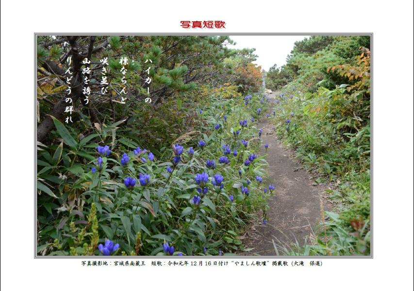 ハイカーの標(しるべ)ならんと咲き並び山路を誘うりんどうの群れ