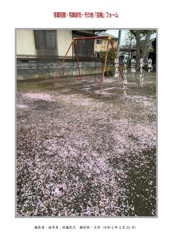 雨風が夜半をかけて地に描くゆさゆさ揺れる桜の大樹