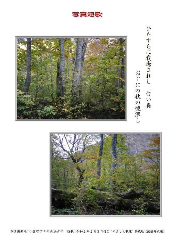 ひたすらに我癒されし「白い森」おぐにの秋の懐深し