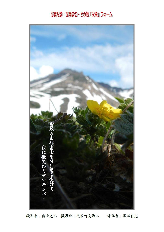雪残る出羽富士を背に陽を受けて我に微笑むミヤマキンバイ