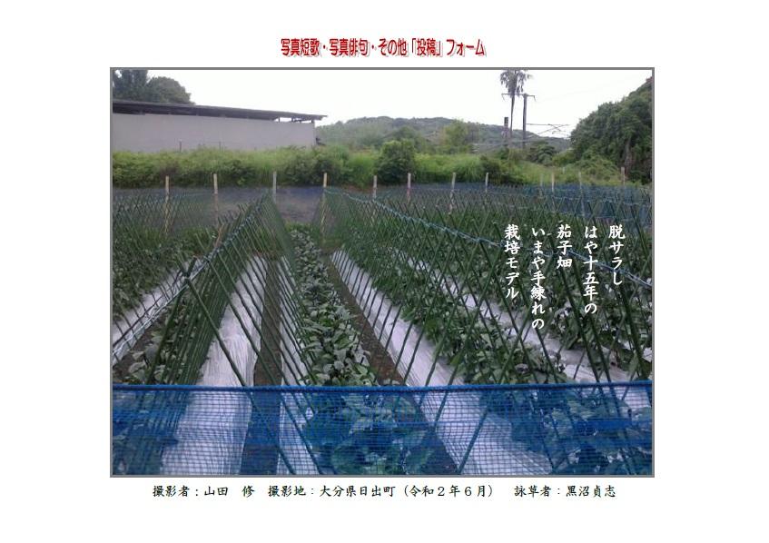 脱サラしはや十五年の茄子畑いまや手練れの栽培モデル