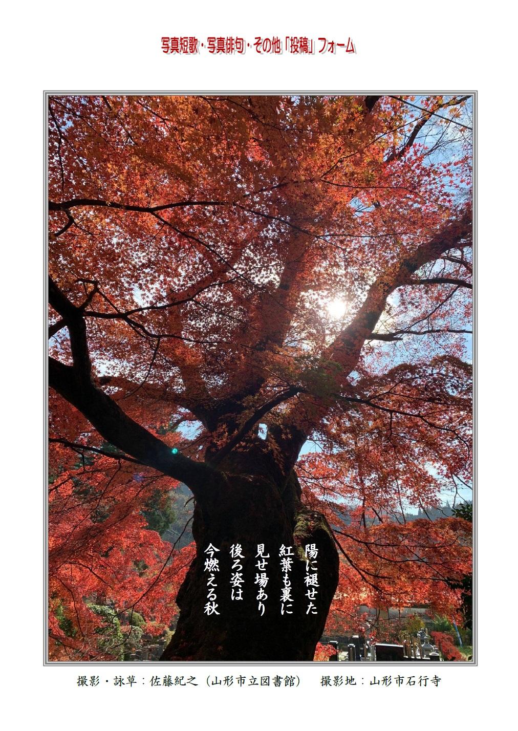 陽に褪せた紅葉も裏に見せ場あり後ろ姿は今燃える秋