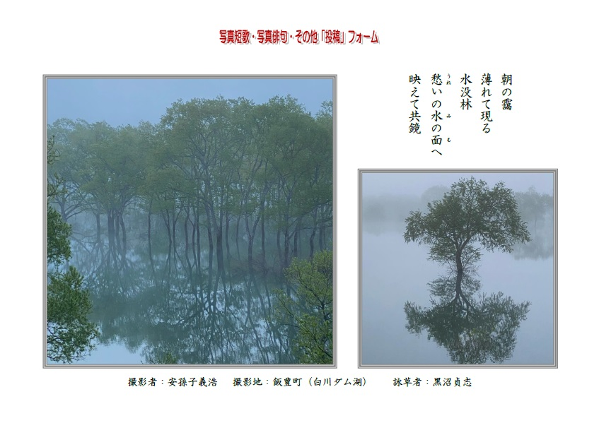 朝の靄薄れて現る水没林愁(うれ)いの水(み)の面(も)へ映えて共鏡