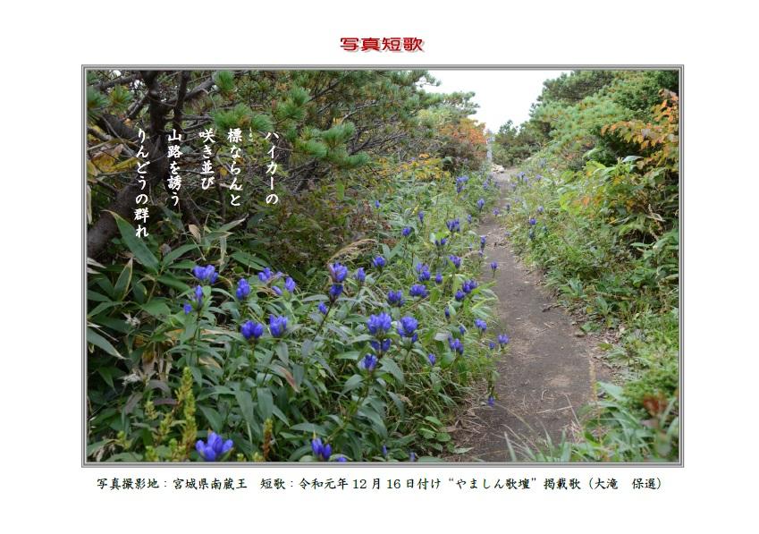 作品番号-32:ハイカーの標(しるべ)ならんと咲き並び山路を誘うりんどうの群れ