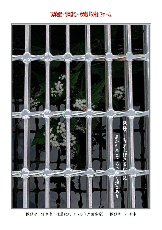 鉄格子より見上げたる白き花置かれたところで咲く強さあり
